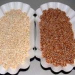 Quinoa, el alimento completo
