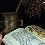 Plantas Medicinales parte2