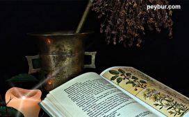 medicina-con-plantas-563x350