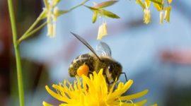 El uso medicinal de la miel de abeja