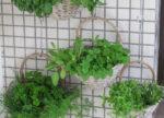 Crea tu balcón de hierbas aromáticas