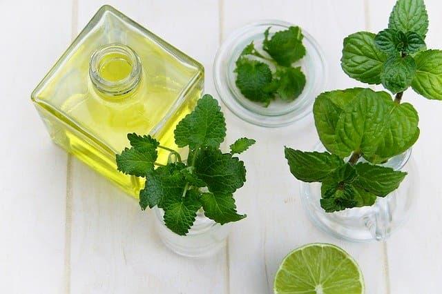 Guía de hierbas y plantas medicinales